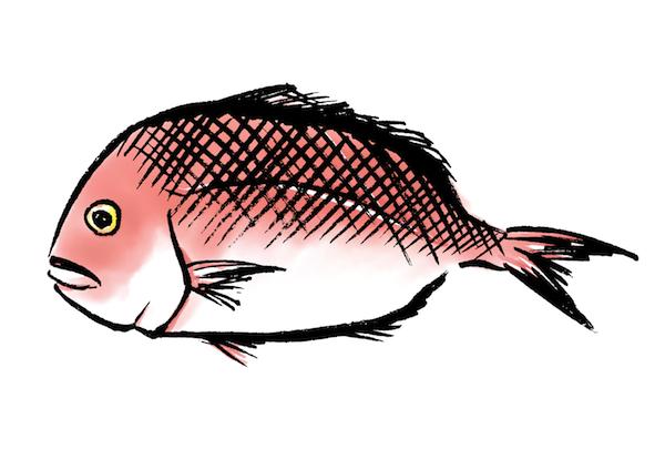 鯛の墨絵イラスト無料